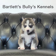 Bartlett's Bully's Kennels