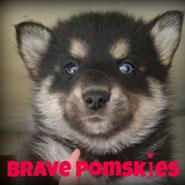 Brave Pomskys logo