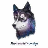 Nashobastar Pomskys