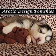 Arctic Design Pomskies logo